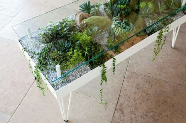 succulent coffee table